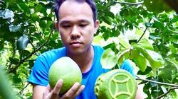 """ĐBSCL: Nhà vườn """"đau đầu"""" vì khan hiếm trái cây tạo hình bán Tết, giá bán có tăng?"""