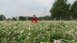 Bình Định: Loài hoa nhuốm màu huyền thoại ở tỉnh Hà Giang bất ngờ xuất hiện ở Phù Cát, nhiều người thích thú