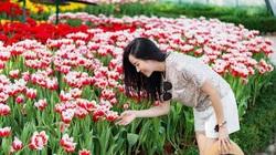 """Khám phá """"mùa hoa Hà Lan"""" sớm nhất thế giới tại đảo nhiệt đới Hòn Tre"""