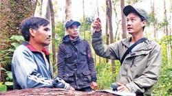 Gia Lai: Đàn thú rừng rủ nhau ngồi vắt vẻo trên cây cất tiếng hót mê li là loài gì mà cứ phải đếm?