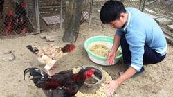 """Hà Tĩnh: Nuôi con đặc sản bán Tết, lùng mua lợn rừng, gà chân to, chậm chân là hết """"cửa"""" đặt tiền"""