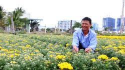 Ninh Thuận: Hoa cúc, nha đam, táo hồng rủ nhau tăng giá, nhà nông lãi lớn