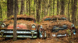 """""""Nghĩa địa"""" của những chiếc ô tô cũ lớn nhất nước Mỹ"""