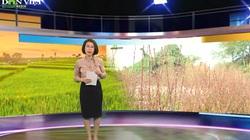 Bản tin Thời sự Dân Việt 22/1: Thời tiết thất thường khiến người dân thấp thỏm trước thềm Tết Tân Sửu