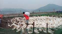 Giá gia cầm hôm nay 24/1: Cập nhật giá gà, vịt mới nhất tại các vùng