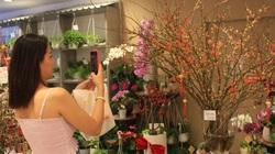 Nhà giàu TP.HCM mua đào Sakura nhập khẩu tiền triệu chơi Tết