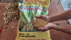 Quảng Trị: Dân kêu lúa giống từ thiện ngâm 10 hạt chỉ nảy mầm 2-3 hạt, cơ quan chức năng nói thế này đây