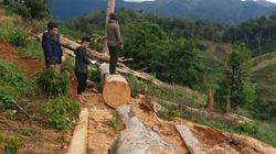 Kiểm tra nhà dân và tiểu khu 388, phát hiện gần 4m3 gỗ không rõ nguồn gốc
