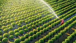 2 hình thức đền bù đất nông nghiệp khi Nhà nước thu hồi