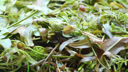 Kon Tum có 1 loại lẩu có hơn 10 loại lá rừng và là một đặc sản nức tiếng ở Tây Nguyên