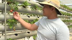 """Vì sao nhiều doanh nghiệp, nông dân chọn tỉnh Bình Thuận là nơi xuống tiền cho """"cuộc chơi"""" nông nghiệp công nghệ cao?"""