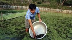 Tuyên Quang: Nuôi loài ốc nhồi đẻ rõ lắm, ông nông dân vớt những con ốc li ti bán 3 triệu/kg