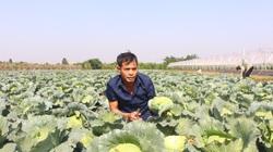 Hà Nội: Những mô hình trồng trọt, chăn nuôi cho thu nhập cao nhờ có vốn đầu tư từ Quỹ Hỗ trợ nông dân