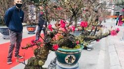 Ngắm thế Đào độc, lạ trị giá từ 100 - 50 triệu đồng tại Lễ hội hoa đào Nhật Tân