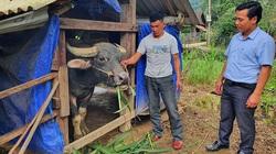"""Gần 500 con trâu bò, gia cầm bị chết rét, tỉnh Quảng Bình chỉ đạo """"nóng"""" điều này"""