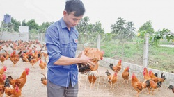 Thái Bình: Cất bằng lái tàu biển về nuôi 35.000 con gà ta, mỗi năm bán 75 tấn, trai họ Trịnh là tỷ phú
