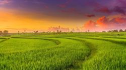 3 bước để xây dựng nhà ở trên đất trồng lúa hợp pháp
