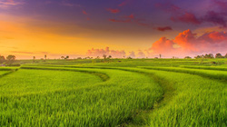 Tự ý chuyển đổi đất trồng lúa sang đất ở sẽ bị xử phạt thế nào?