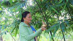 Bắc Giang: Một nông dân tỷ phú trồng giống tre gì mà mỗi ngày cắt măng bán kiếm được 3-5 triệu đồng?