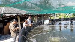 Long An: Mới nuôi 4 vụ tôm công nghệ cao mật độ dày đặc trên cạn mà một ông nông dân thành tỷ phú
