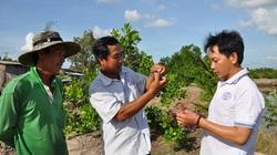 """Độc đáo: Nuôi cua, nuôi tôm ở ruộng lúa mà một nông dân tỉnh Kiên Giang """"đút túi"""" 300 triệu/năm"""