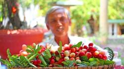 Tiền Giang: Đường đẹp mê li trồng thứ cây ra trái lạ đỏ như lửa của một ông nông dân nhiều người kéo đến xem