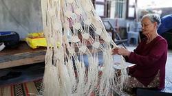 Quảng Nam: Cây ngô đồng là loài cây gì mà cả cù lao chỉ còn 2 người đàn bà gỡ vỏ cây đan võng