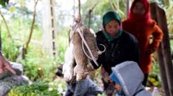 Nghệ An: Chuột rừng, sâu măng ngoe nguẩy, vô số sản vật núi rừng bán đắt khách trong thời tiết giá rét ở nơi này