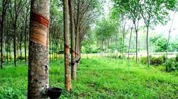 Muốn xây nhà trên đất trồng cây lâu năm, phải làm gì?