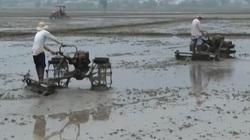 Nông dân Bà Rịa - Vũng Tàu khẩn trương xuống giống vụ lúa đông - xuân 2020-2021