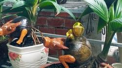 Tết Tân Sửu 2021: Dừa bonsai hình con trâu trông như thế nào mà khiến dân chơi bỏ hàng triệu đồng để mua