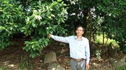 Lâm Đồng: Trồng loài cây lạ tốt um, ra thứ hạt ví như vàng đen, có 1 cây bất ngờ cho tới 90 kg hạt