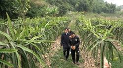 Phát triển chuỗi liên kết trồng cây ăn quả, nông dân Sơn La bỏ túi cả trăm triệu đồng mỗi năm