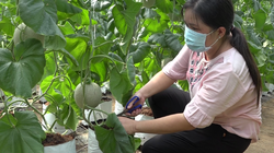 """Tiền Giang: """"Thủ phủ trái cây"""" xuất hiện nhiều tỷ phú nông dân mặc dù gặp năm hạn mặn và dịch Covid-19"""
