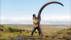 Nghề lạ, đi đào ngà voi ma mút vừa dài vừa cong, cả năm làm có 65 ngày đút túi mấy tỷ đồng?