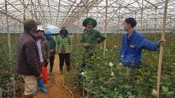 Vụ dân cho thuê đất 3 năm không nhận được tiền ở Lâm Đồng: Trầy trật đòi nợ doanh nghiệp