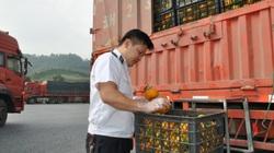 20.000 hồ sơ, thủ tục liên quan kiểm dịch thực vật ở Lào Cai được xử lý qua mạng