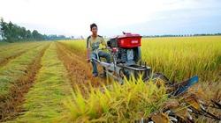 Năm 2021, chuyển nhượng đất nông nghiệp có phải nộp thuế thu nhập cá nhân?