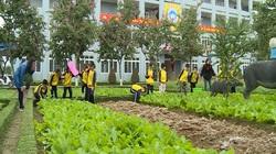 Nghệ An: Tận dụng quỹ đất, xây dựng nông trại sạch trong học đường
