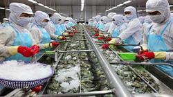 """""""Vua tôm"""" Minh Phú: Đói tôm nguyên liệu gay gắt, nhà máy của tôi ở Hậu Giang chỉ được 50% công suất"""