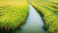 Xây nhà trên đất trồng lúa năm 2021 sẽ xử phạt thế nào?