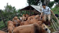 Nông dân Thuận Châu thi đua sản xuất và kinh doanh giỏi