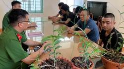 """Gia Lai: Xuất hiện """"chiêu"""" bán hoa lan rừng đột biến giả, công an TP Pleiku phát thông báo tìm nghi can lừa đảo"""
