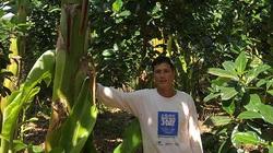 Bình Thuận: Ông nông dân này trồng thứ chuối gì mà ra trái to bự bất thường, thương lái cứ đặt tiền đòi mua?