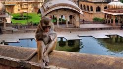 Sửng sốt trước vẻ đẹp của ngôi đền dành cho loài khỉ