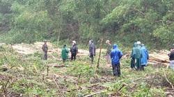 Thị xã Hương Trà (TT-Huế): Chính quyền lập hàng chục biên bản, việc chặt phá rừng trồng vẫn tiếp diễn