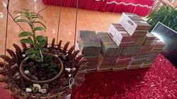 Sơn La: Xôn xao vụ chuyển nhượng lan đột biến Phi điệp Hồng Hạ Vân trị giá 5,5 tỷ đồng