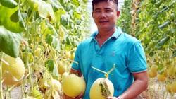Cà Mau: Vay vốn Quỹ Hỗ trợ nông dân trồng dưa lưới công nghệ cao, nuôi thủy sản, con đặc sản, thu tiền tỷ