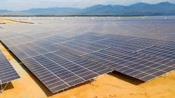 Xuất hiện dự án nông nghiệp 'trá hình' làm điện mặt trời: EVN nói gì?