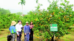 Xây dựng, phát triển, sử dụng hiệu quả nguồn vốn quỹ Hỗ trợ nông dân: Một mũi tên trúng nhiều đích
